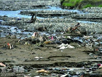 塑料袋对动物的危害