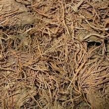 决明子茶的功效与作用_【糯稻根】糯稻根的功效与作用_食用方法_禁忌